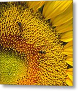 Busy Sunflower Metal Print