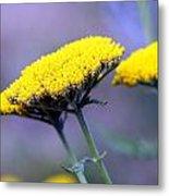 Butter Weeds Metal Print