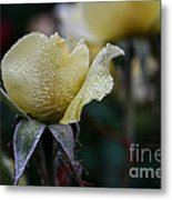 Buttercream Petals Metal Print