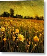 Buttercup Meadow Metal Print