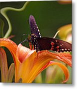 Butterflies Are Free... Metal Print by Arthur Miller
