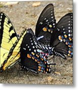 Butterflies By The Buches Metal Print