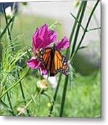 Butterflies Fly Metal Print