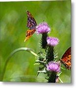 Butterflies On Thistles Metal Print