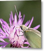 Butterfly - Plain And Simple Metal Print