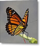 Butterfly - Sitting On The Green Metal Print
