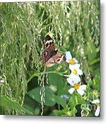 Butterfly 14 Metal Print