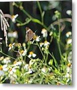 Butterfly 17 Metal Print