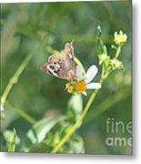 Butterfly 21 Metal Print