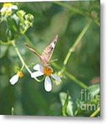 Butterfly 22 Metal Print