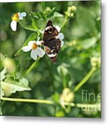 Butterfly 25 Metal Print