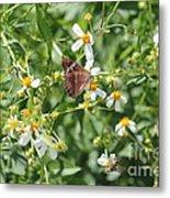 Butterfly 30 Metal Print