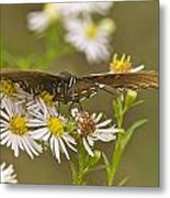 Butterfly 3319 Metal Print