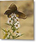 Butterfly 3321 Metal Print