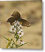 Butterfly 3322 Metal Print