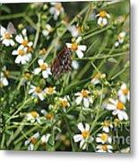 Butterfly 35 Metal Print