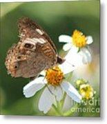Butterfly 39 Metal Print