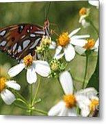 Butterfly 41 Metal Print