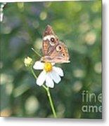 Butterfly 42 Metal Print
