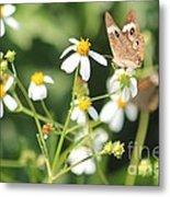 Butterfly 44 Metal Print