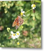 Butterfly 46 Metal Print