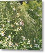 Butterfly 49 Metal Print