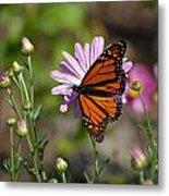 Butterfly 89 Metal Print