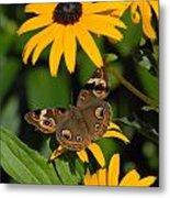 Butterfly 94 Metal Print