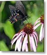 Butterfly And Coine Flower Metal Print