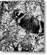 Butterfly Bark Black And White Metal Print