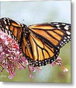 Butterfly Beauty - Monarch IIi Metal Print