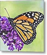 Butterfly Beauty-monarch Metal Print