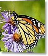 Butterfly Blessing Metal Print