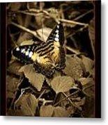 Butterfly Brown Metal Print