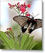 Butterfly Candy Metal Print