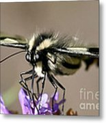 Butterfly Closeup Metal Print
