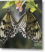 Butterfly Duo Metal Print