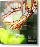 Butterfly Frosted Glass Metal Print