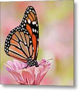 Butterfly Garden IIi Metal Print