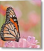 Butterfly Garden Iv Metal Print