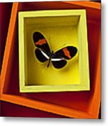 Butterfly In Box Metal Print