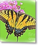 Butterfly In Candyland Metal Print