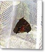 Butterfly In Network Metal Print