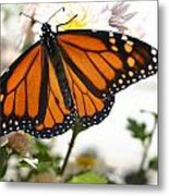 Butterfly In October Metal Print