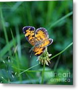Butterfly In Square  Metal Print