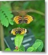 Butterfly Lovers Metal Print