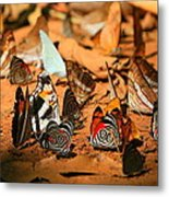 Butterfly Menagerie Metal Print