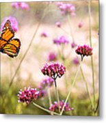 Butterfly - Monarach - The Sweet Life Metal Print