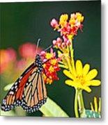 Butterfly Monarch On Lantana Flower Metal Print