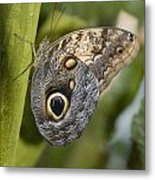 Butterfly On A Green Branch Niagara Metal Print
